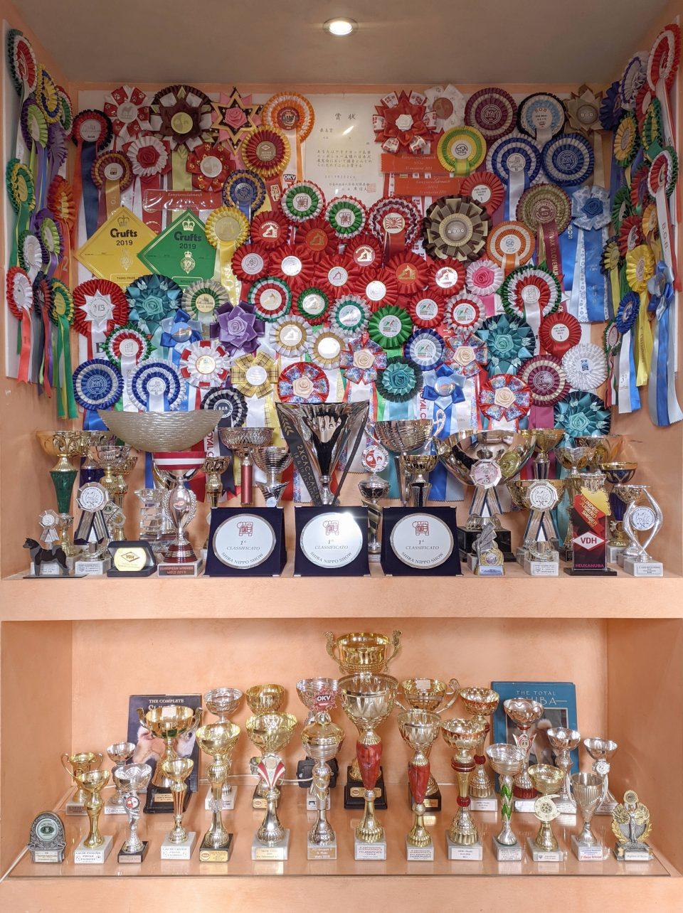 Bacheca trofei